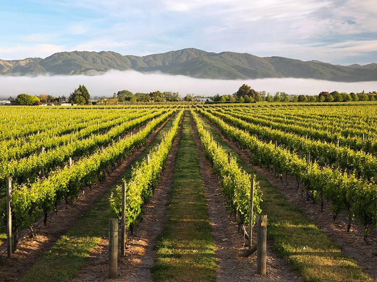 Vineyards crisscross the sunny Wairau Valley in Marlborough, New Zealand's premier wine-growing district. The sun-drenched, sheltered plains of the valley, with its long autumns and crisp winters, produce a unique grape and more than 70 percent of New Zealand's wine. Photograph by Robert Harding World Imagery/Alamy, December 23, 2014