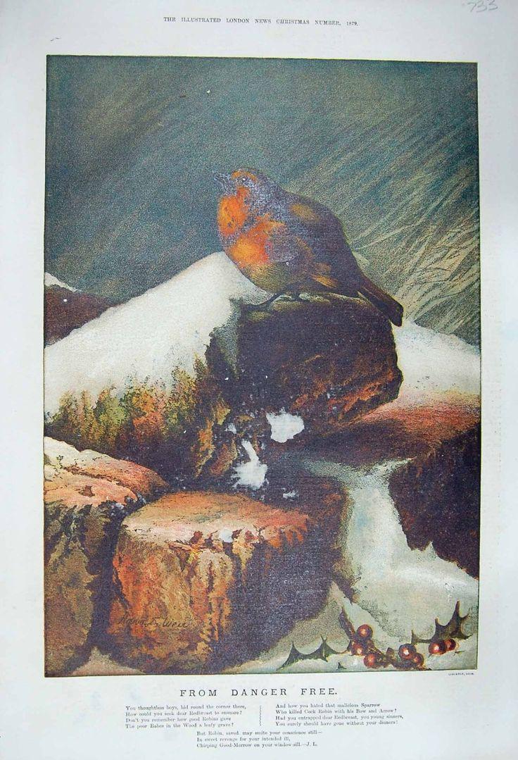 1879 DALL'UCCELLO LIBERO DI PETTIROSSO DEL PERICOLO DAMAGEDPRINT ROBIN: Amazon.it: Casa e cucina