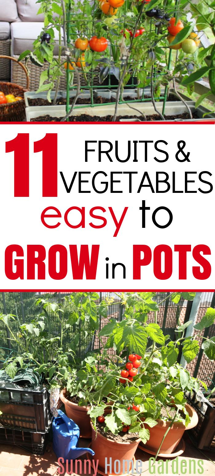 11 Easy Fruits And Vegetables To Grow In Pots Growing Vegetables Planting Herbs Vegetables
