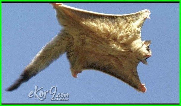 9900 Koleksi Gambar Hewan Yg Terbang Gratis Terbaik