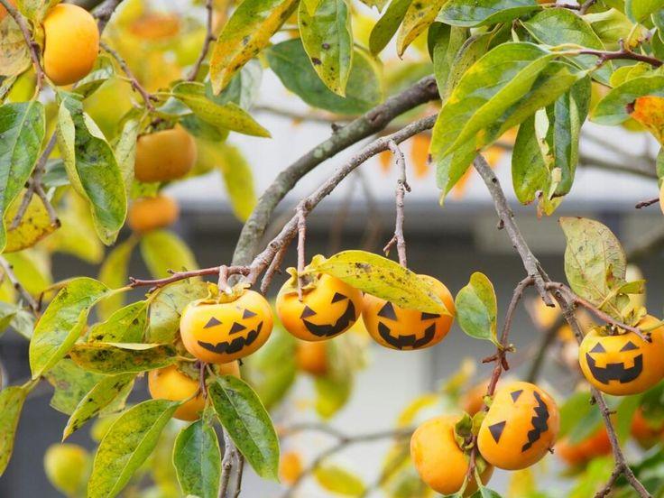 小さな庭の画像 by yo*さん | 小さな庭と甘柿とカキとハロウィンコンテスト2016とハロウィンと庭木とガーデニング