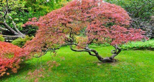 Bambou, cerisier du japon, magnolia, et autres troènes du japon, le jardin zen s'aménage avec des arbres à feuillage persistant et arbustes à fleurs