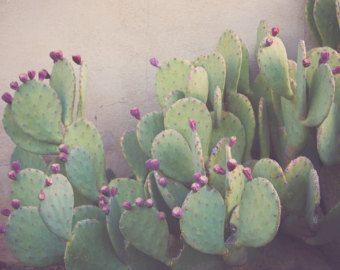Cactus Photographie Photographie figue de barbarie, au texas, art du Sud-Ouest, Ouest impression, texas décor, décor western, art mural grand, Bohème