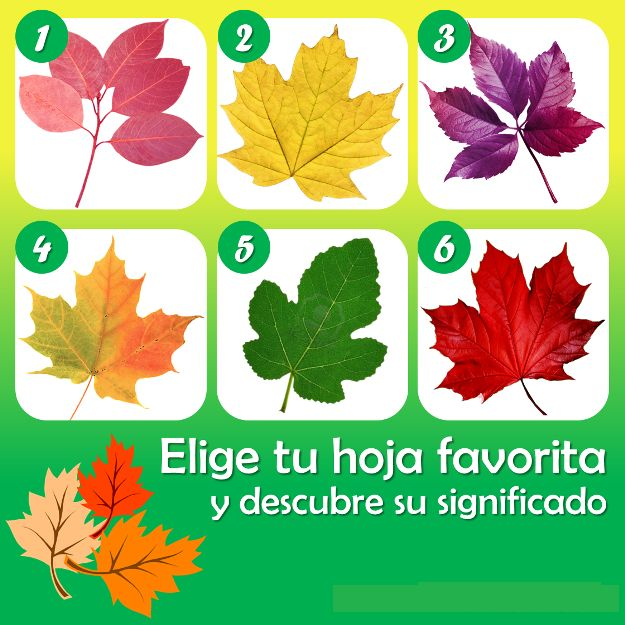 Las hojas de los rboles adem s brindarnos sombra y de for Las caracteristicas de los arboles
