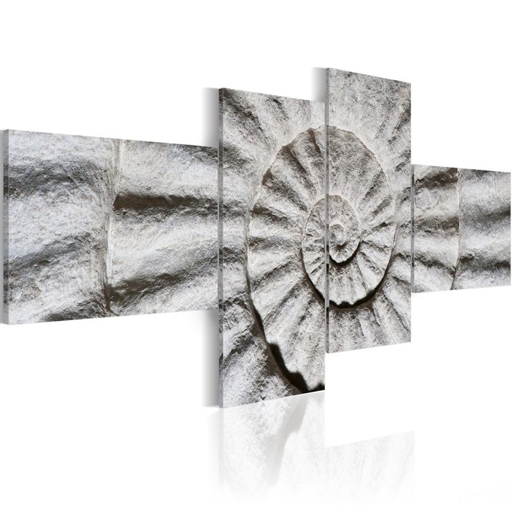 Obraz - Kamienna muszla