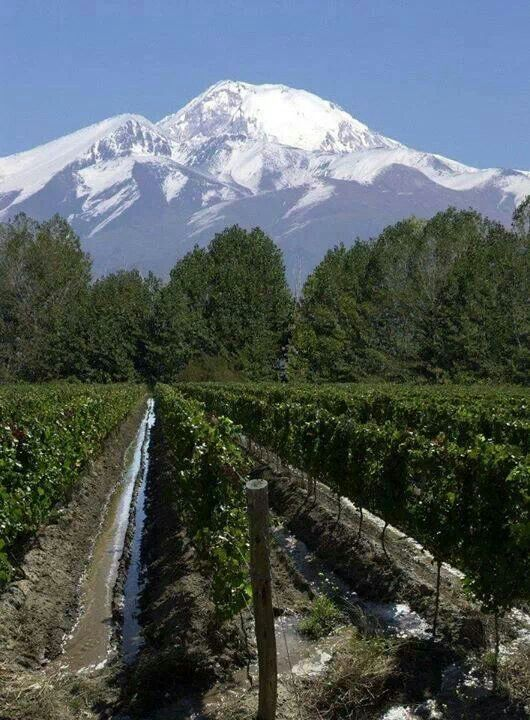 Mendoza, Argentina...I wish I could have stayed just a few more days :)
