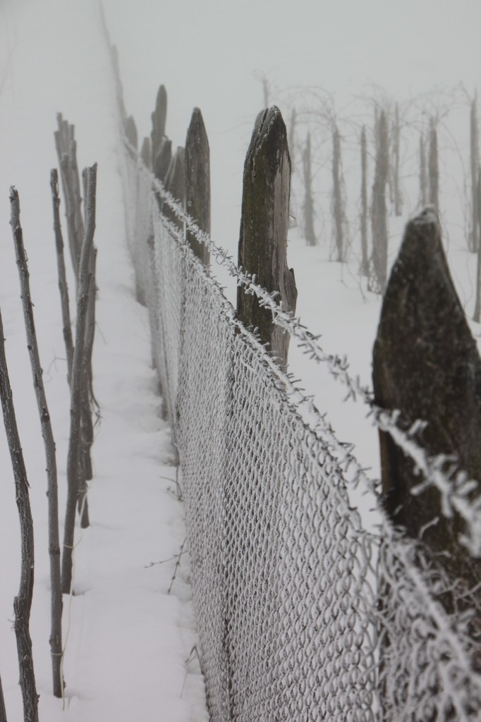 Frozen Fence Wire, Winter - Public Domain Photos, Free Images for Commercial Use