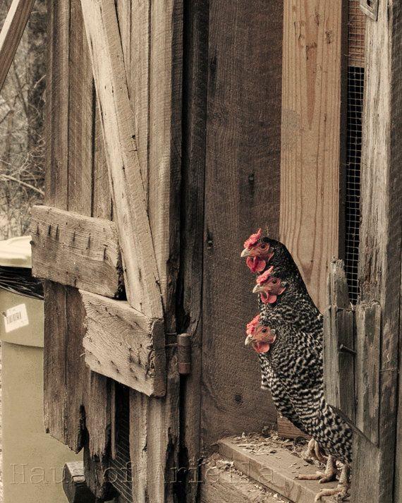 Rustic Chicken Photography Print by HausofAriella on Etsy, $12.00