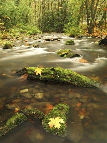 A Stream Flows Through the Rainforest at Goldstream Provincial Park Near Victoria, British Columbia Photographic Print - Glenn Bartley