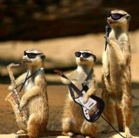 bahaha rockin' meerkatsFunny Pics, Funny Animal Pictures, Funny Pictures, Zz Tops, Funny Photos, Rocks Band, The Band, Animal Photos, Music Band