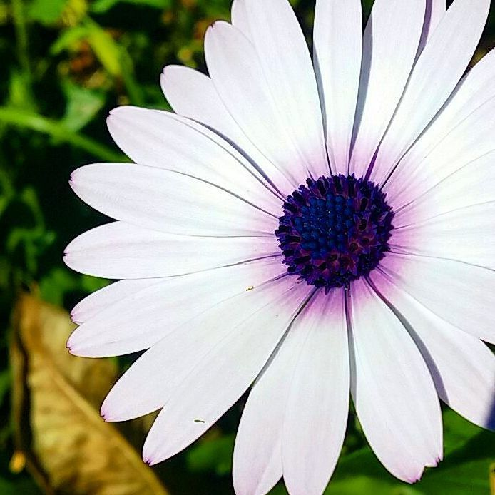 #flower name I never can remember. .The botanical name.. I think it starts with O