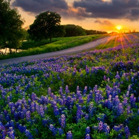 Colorful sunset clouds tower over Texas bluebonnets.