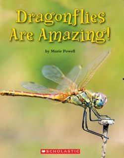 Dragonflies Are Amazing! by Marie Powell, from the Scholastic Education Grade 2 Guided Reading Series. See http://education.scholastic.ca/productlist/LPEY_G2_GUIDED_READING for the full list of Grade 2 Guided Reading packs.