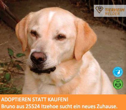 Bruno wurde als Epileptiker im Tierheim abgegeben und hat stundenlang nach seinem Frauchen gerufen.  http://www.tierheimhelden.de/hund/tierheim-itzehoe/labrador_golden_retriever_mix/bruno/4426-0/  Bruno hat enorme Sehnsucht nach seinen Menschen. Diese ist so groß, dass er sogar anfängt, sich selbst Verletzungen zuzufügen. Es ist daher sehr wichtig, dass der sanfte Bruno sehr bald ein Zuhause findet. Die Medikamentenkosten von 40€ im Monat sollten für diesen tollen Kerl doch aufzubringen…