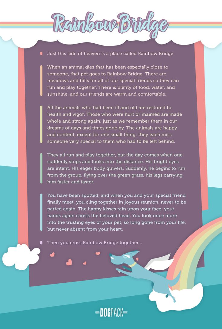 Rainbow bridge is best known as a poem to mourn a beloved pet who has passed away. If you're struggling to find a way to cope with the loss of your dog, try printing off the rainbow bridge poem and sticking it somewhere visable. Every day you feel like breaking down, remember that somewhere, your pet is waiting for you.