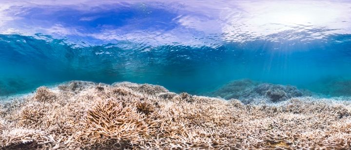 Longest Global Coral Bleaching On Record Isn't Over Yet | Climate Central