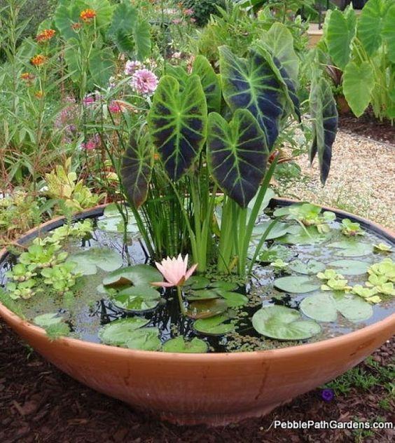 beautiful container water garden idea httpoutdoorareasblogspotco - Patio Container Garden Ideas