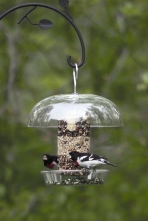 Wild Birds Unlimited: Dinner bell feeder, has life time warranty, and easy. great combo feeder to offer suet and seed in a clean tidy feeder