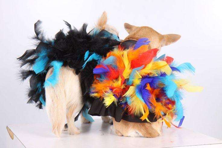 http://regalidacani.it/categoria-prodotto/regali-da-cani/abbigliamento/ #pull #party #cappottini #chiuaua #PrettyDog www.regalidacani.it