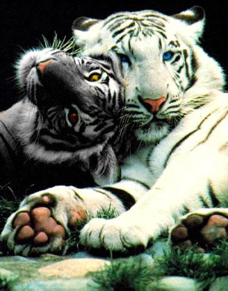 Tiger kingdom ~Are you looking for more pins? Follow me! -Trasher Gunnolf