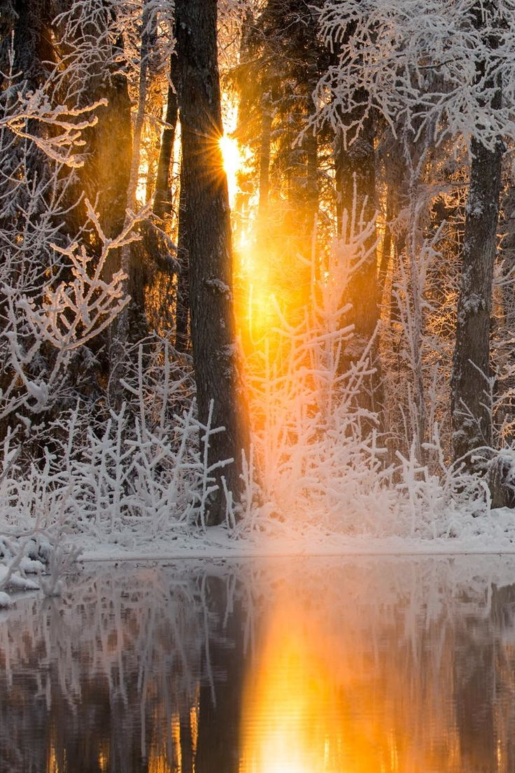 Winter Reflections in Silver and Gold #BeautifulNature #Reflections #Winter…