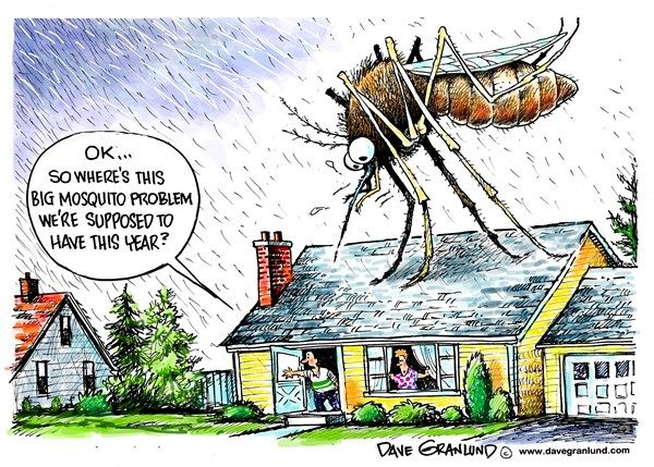 1000+ images about Mosquito Humor on Pinterest