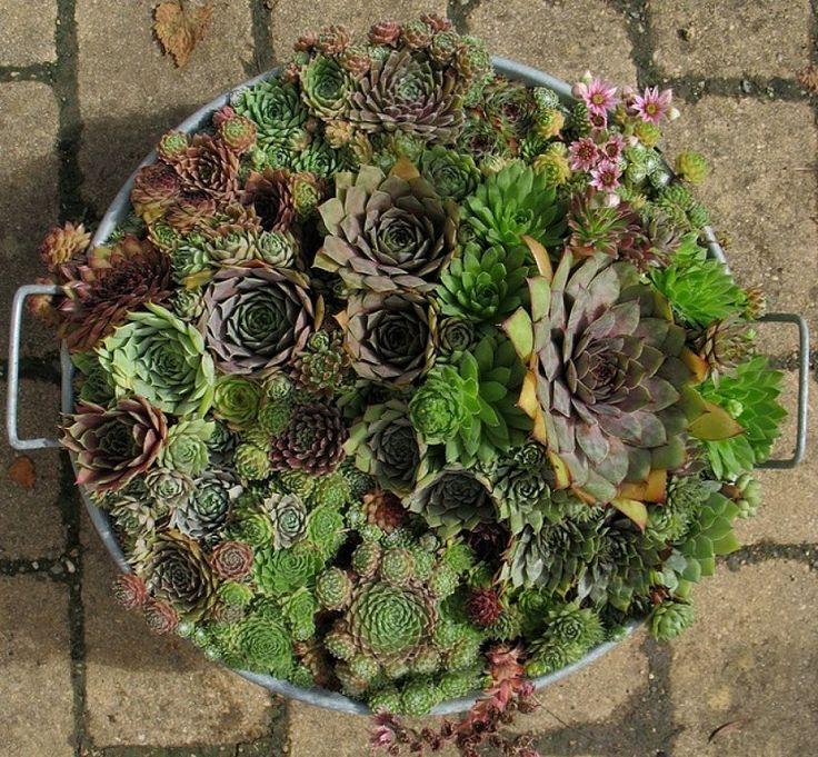 58 best crasas y cactus images on pinterest succulents - Composiciones de cactus ...