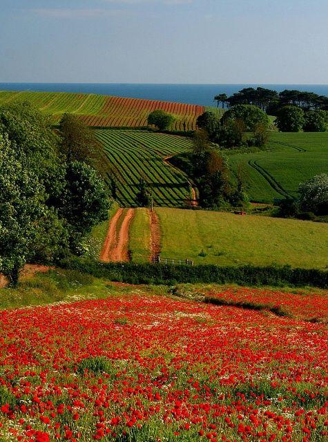 Devonshire Countryside, England.