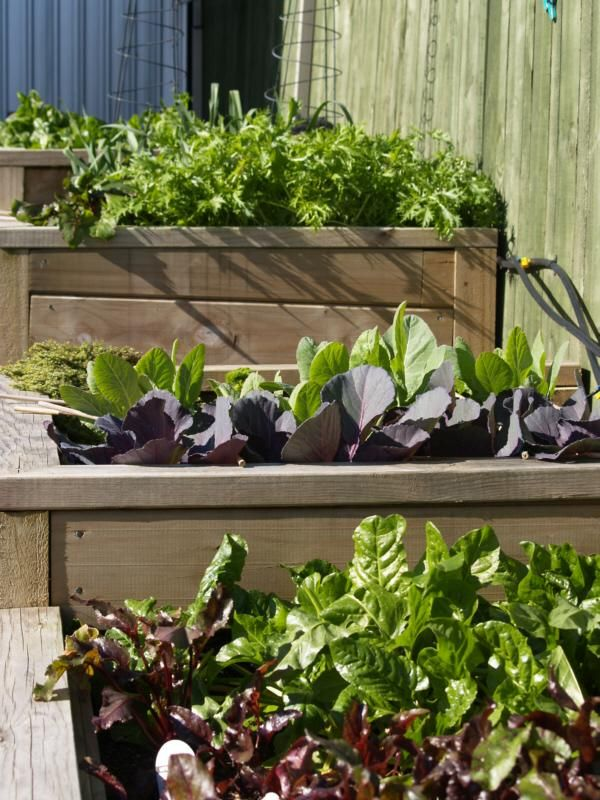 22 best images about Raised beds on Pinterest Gardens