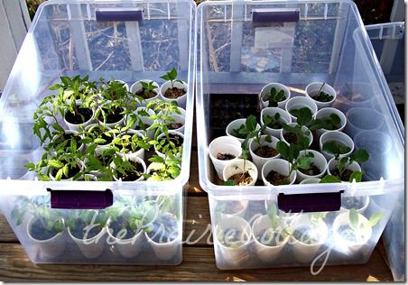 Instead of a cold frame, use inexpensive plastic boxes to help seedlings in the Spring.