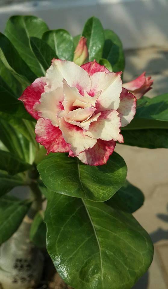 ... | Rose Arra... Flower Delivery San Francisco Ca