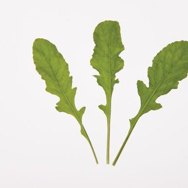 Astro Arugula Seeds (Eruca sativa) + FREE Bonus 6 Variety Seed Pack - a $30 Value!