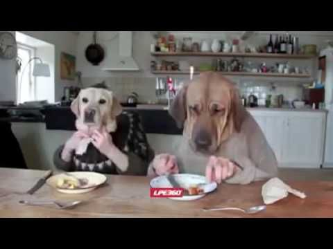 This is The Best Life To Be a Dog And Treat Like a Dog Most Funny Videos https://www.youtube.com/watch?v=F7A8tnZzwrc