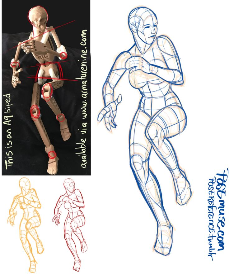 human anatomy for artists the elements of form ebook