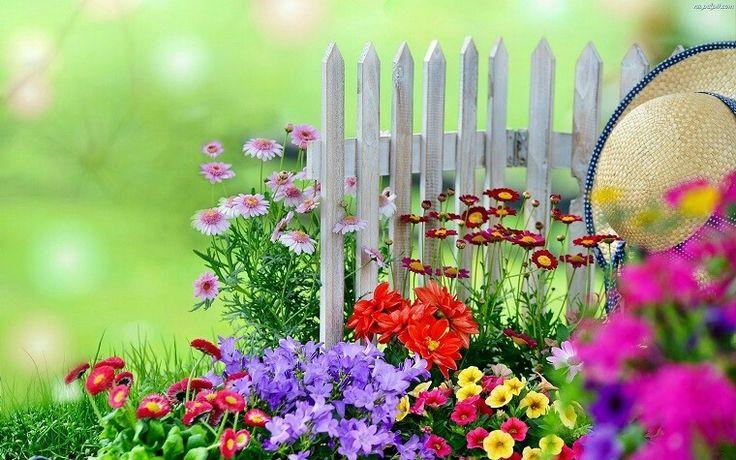 Valla blanca y flores pequeñas muy bonitas