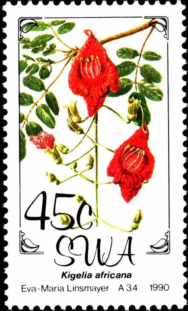 South West Africa 1990 Flowers Kigelia Africana Sudwestafrika Mi Na Sw 666 Sn Na Sw 643 Yt Na Sw 623 Sg Na Sw 536 Flower Stamp Stamp Postage Stamps