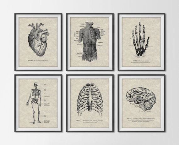 Vintage Anatomy Set of 6 Art Prints - Antique Human Figures - Scientific Anatomical Book Art - Medical Illustrations Office Decor