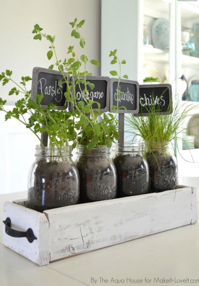 Herbs in old drawer inside fruit jars for kitchen window sill.