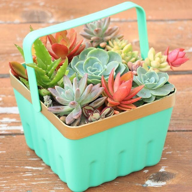 A little more succulent action for you. Find out how I transformed this $1 Easter basket into a cute little planter on the @rebecca_simpleasthat blog today.