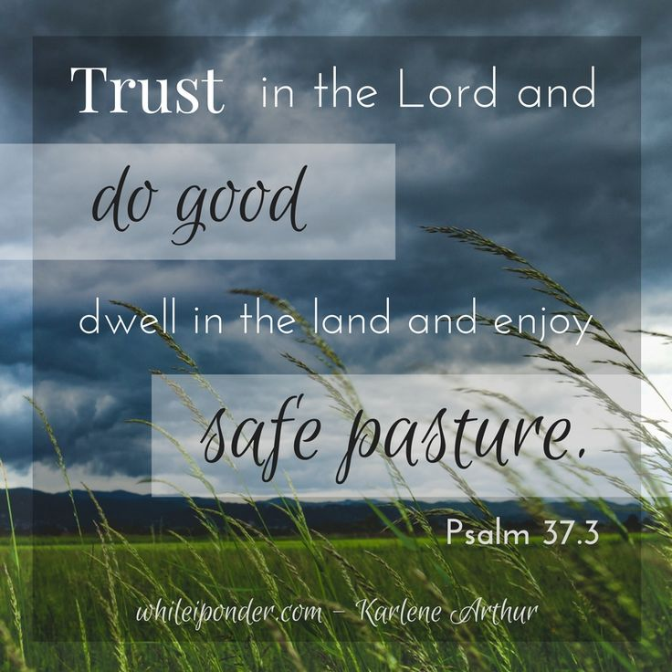 Trust in the Lord and do good...dwell in the land and enjoy safe pasture. Psalm 37.5