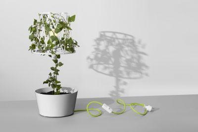 Green Lamp biała // Siesta
