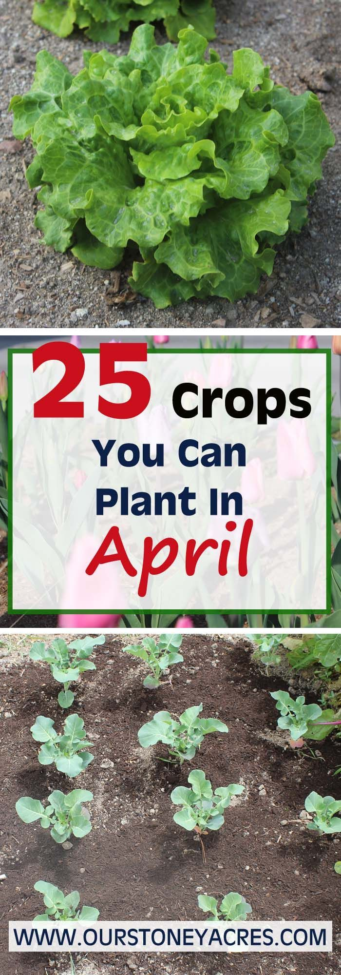As the weather finally starts to warm this April Planting guide will help those of you in zones 5 and 6 to get an early start on this year's vegetable garden.