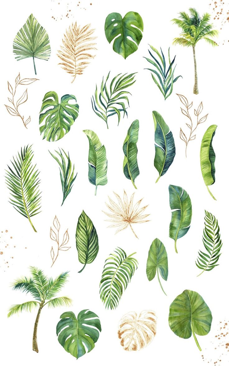 Watercolor Plants, Watercolor Images, Floral Watercolor, Watercolor Paintings, Watercolor Wedding, Plant Painting, Plant Art, Jungle Art, Leaf Drawing