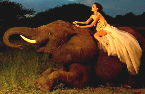 Brides Take Wedding Elephant Rides in South Africa