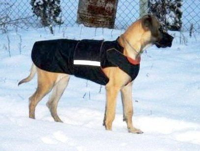 CUSTOM MADE EXTRA WARM WINTER DOG COAT WITH UNDERBELLY PROTECTION  This coat is appropriate for your dog even if she/he is very large, well muscled or has an unusual body type. The coat has three layers: • waterproof and windproof outer  • wadding  • fleece lining Other features  • underbelly covering • it fastens at the back and at the shoulders with Velcro which allows room for adjustment • reflective safety tape  • easy to put on  Pepper Pet Wear dog coats are hand tailored to fit your…