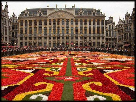 Lindo Tapete de Begônias em Bruxelas na Bélgica