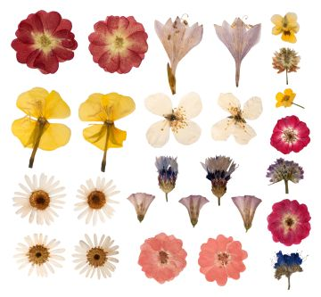 Image result for pressed flowers