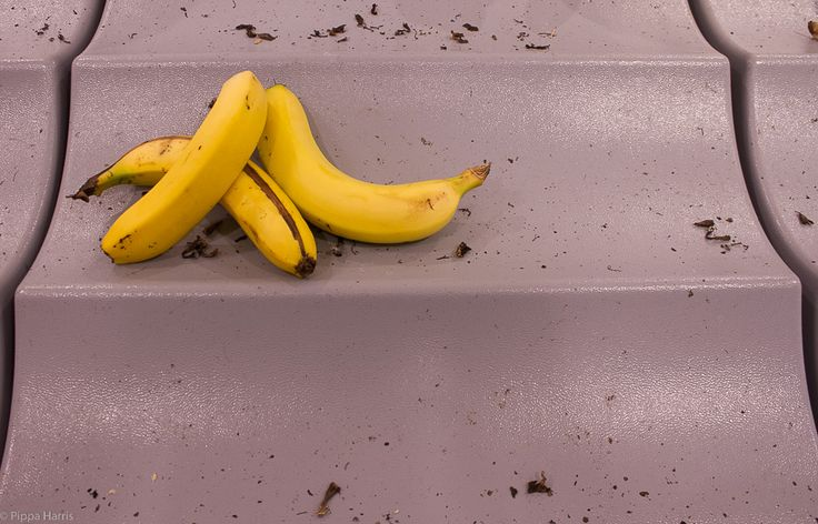 Rule of odds/negative space P ISO 400 f/4.5 1/60 18mm. Again I have limited access to subject matter and I don't really get this particular task...so bananas at Coles it is :) Cropped in LR