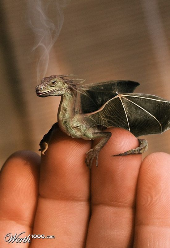 Wish i had a pocket dragon...think how useful this would be for toasting marshmallows!