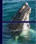 Petit Passage Whale Watching, Nova Scotia, Canada